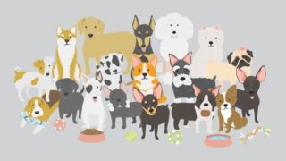 illustration-dogs-collection